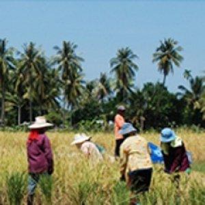 โครงการชุมชนจัดการตนเองเพื่อความมั่นคงด้านอาหารตำบลเกาะสุกร อำเภอปะเหลียน จังหวัดตรัง (phase1)