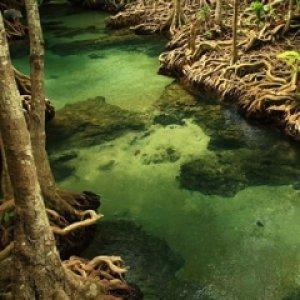 โครงการเยาวชนรักษ์ท่าชนะพาน้องเรียนรู้ ดูแลป่าพรุ